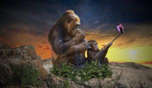 monkey-3554261_1280